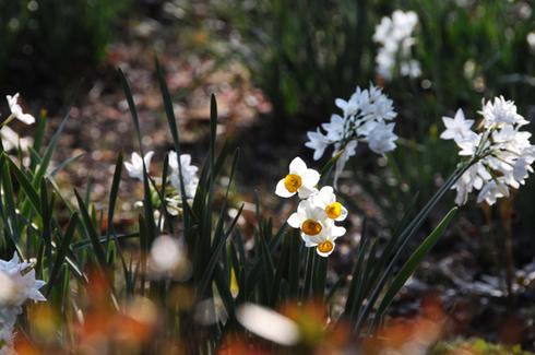 Springhascome