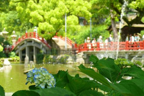 Photo_262